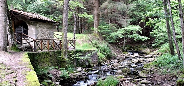 Foreste Casentinesi - Casentino