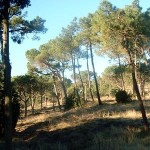 parco galceti