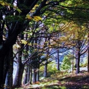 riserva Acquerino Cantagallo