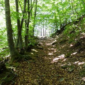 foresto del teso