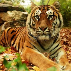 zoo pistoia1