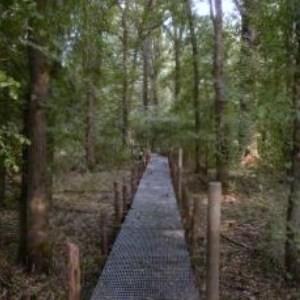 bosco di bottaccio1