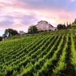 strada vino chianti