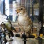 museo ornitologico