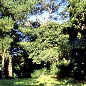 Arboreto moncioni