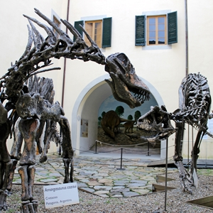 MUSEO DI CALCI