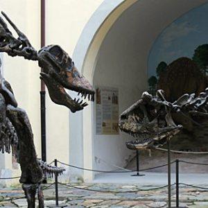 Museo di Storia Naturale - Calci