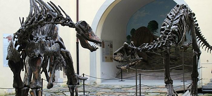 Museo di Storia Naturale dell'Università di Pisa - Calci