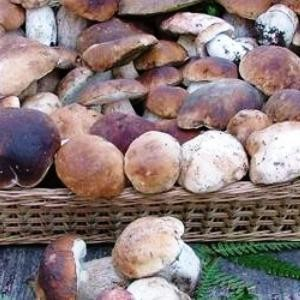 festa fungo porcino