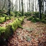 foresta della verna