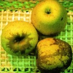mela rugginosa