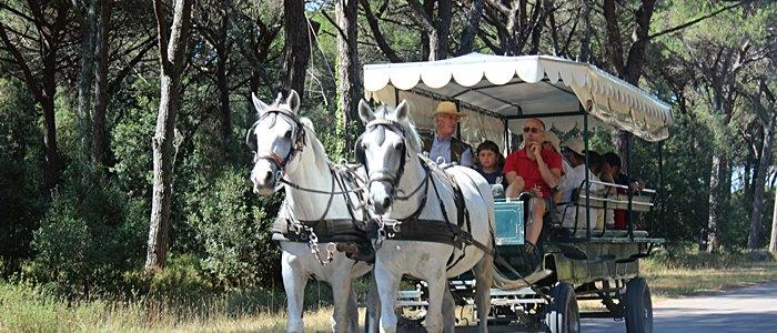 Parco Migliarino San Rossore Massacciucoli