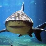 aquarium mondo marino