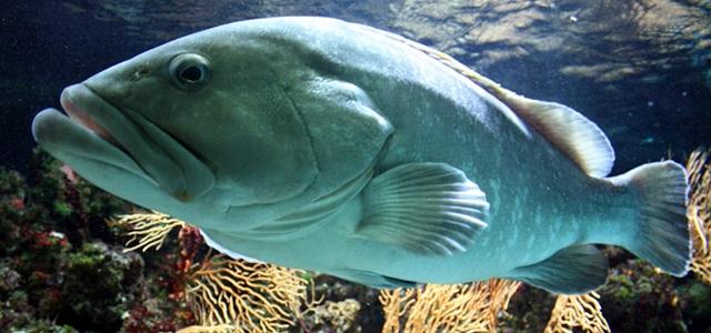 argentario acquario