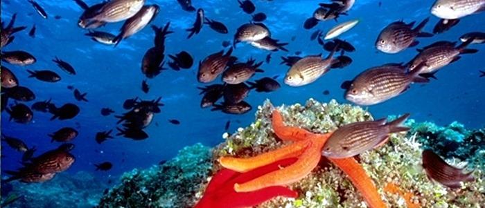 campo-nellelba-acquario-pesci
