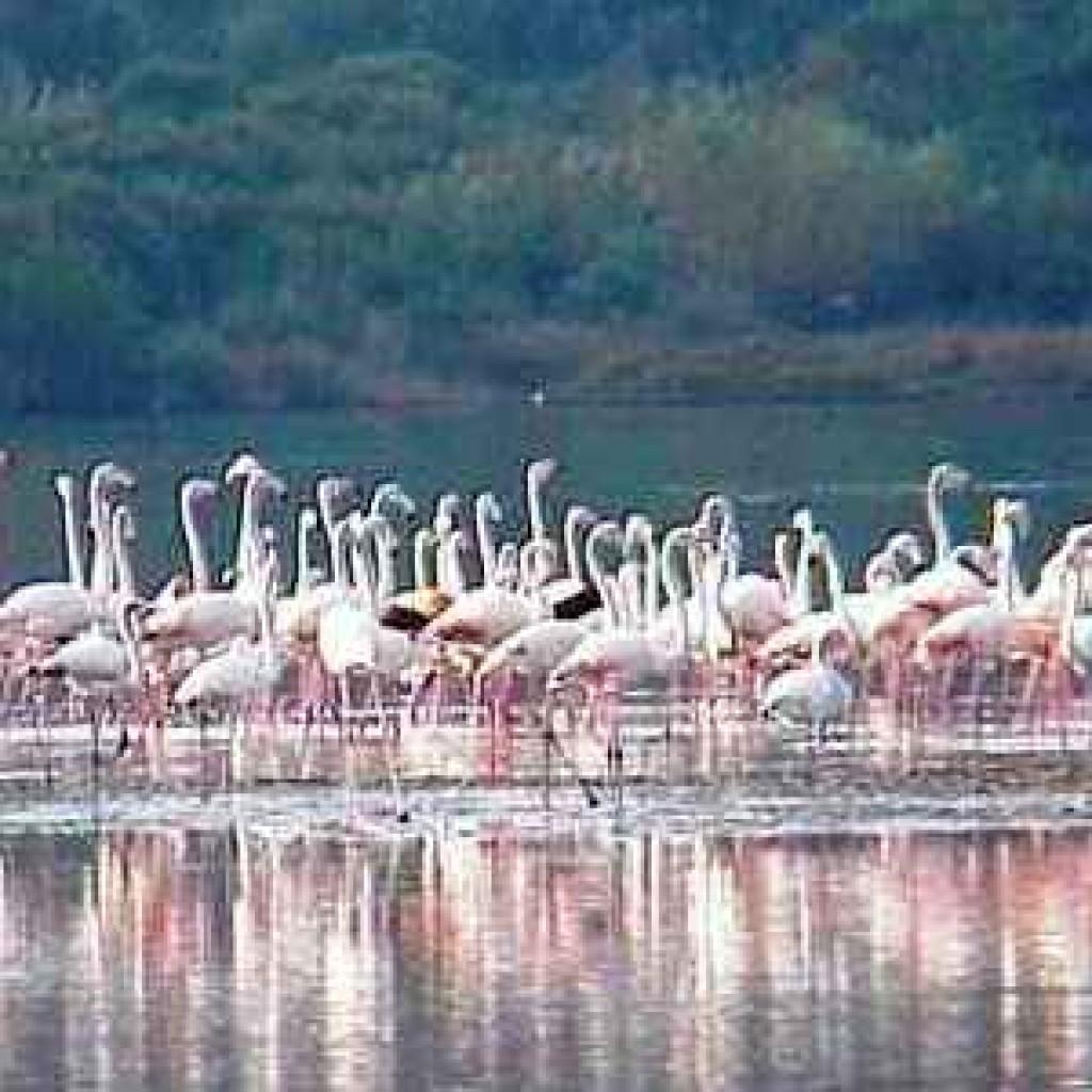 riserva Laguna di Orbetello