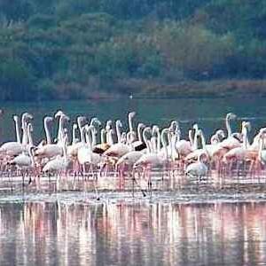 Laguna di Orbetello - fenicotteri