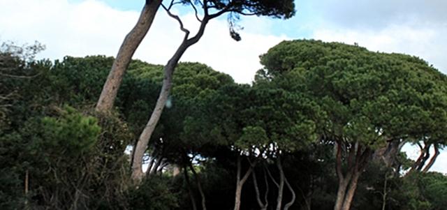 Parco Rimigliano
