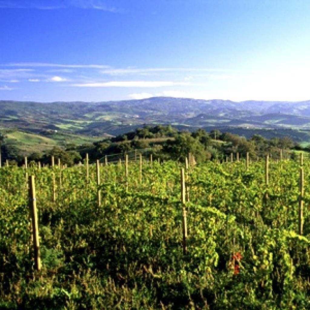 Strada del Vino di Montecucco