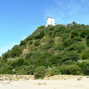 torre civette