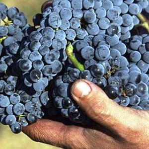 vino montecucco DOCG
