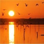 lago massaciuccoli2