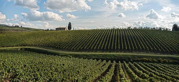 Bagno a Ripoli - percorso enogastronomico del vino