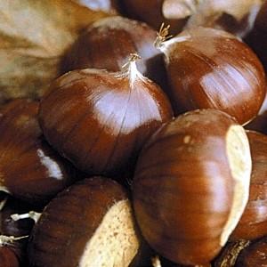 marron-buono-marradi
