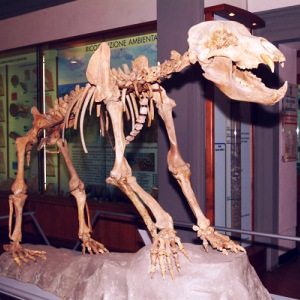 museo paleontologia Empoli