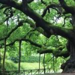 parco arboreto carlo siemoni