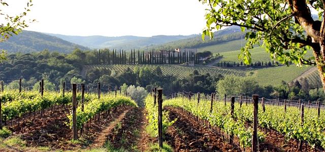 Chianti zona - Chianti zone - Tuscany - Toscana - Italy