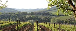 Strada del vino