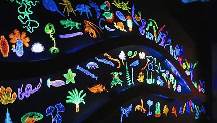 Museo di Storia Naturale della Maremma - Grosseto