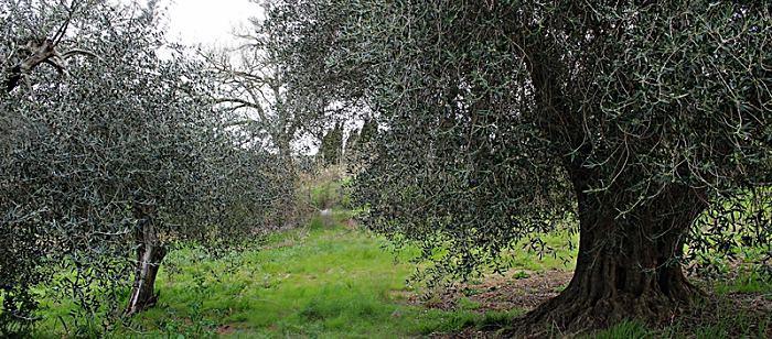 Terreno edificabile a Magliano in Toscana
