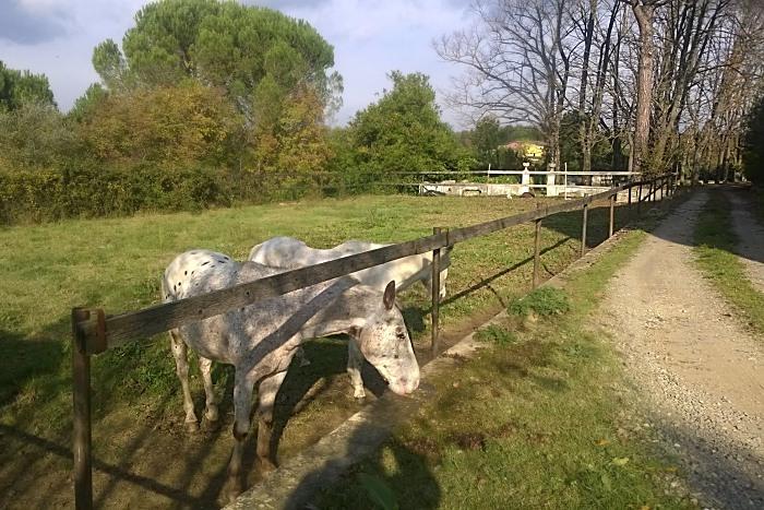 Il Cavallone agriturismo