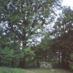 Reggello (FI) - Foresta di Sant'Antonio