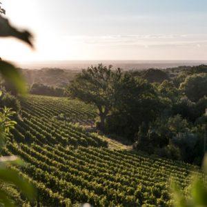 Ornellaia wine