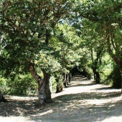 Riserva naturale di Pietraporciana