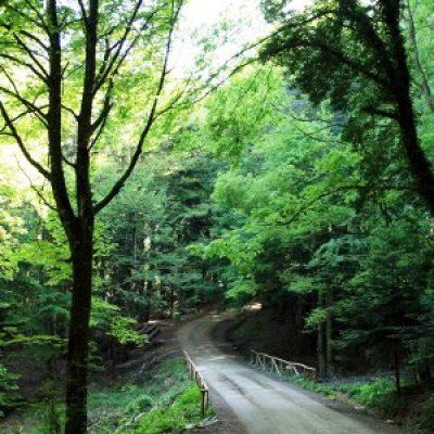 riserva naturale del Pigelleto