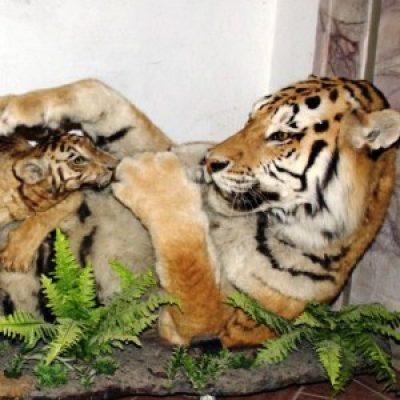 Museo Zoologico
