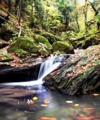 Parco Nazionale delle Foreste Casentinesi Monte Falterona Campigna
