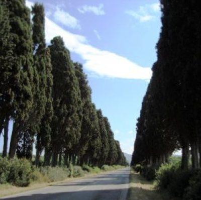 Via dei Cipressi