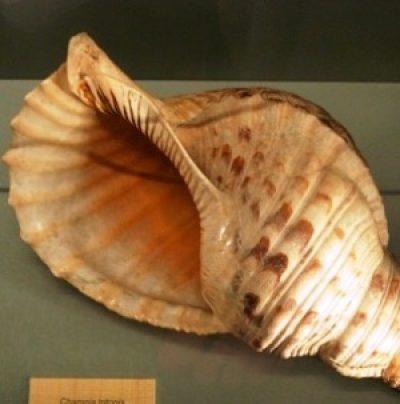 Museo della Malacologia