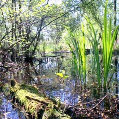 Lago di Porta