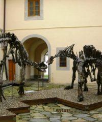 Museo di Storia Naturale dell'Università di Pisa
