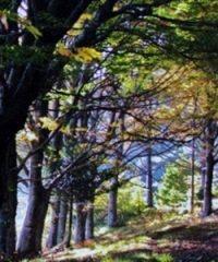 Riserva Naturale Acquerino-Cantagallo