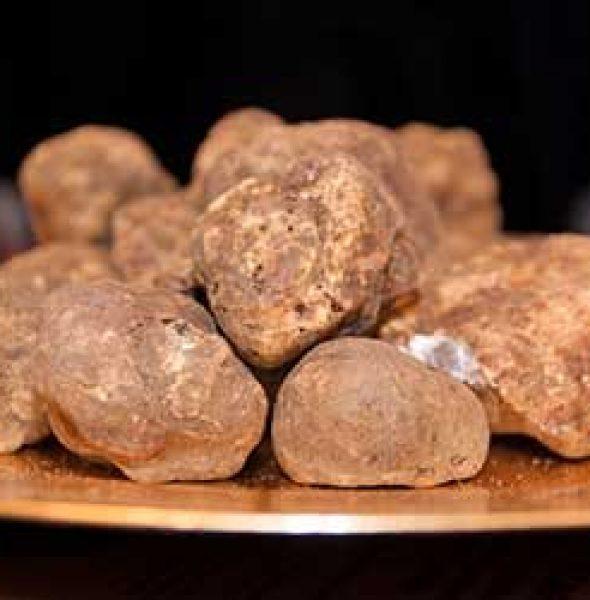 White Truffle Market 2016   San Miniato