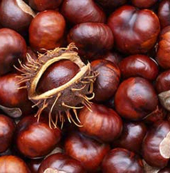Chestnut Festival Marradi 2016 (FI)