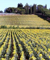 Arezzo  and Cortona Wine Tasting