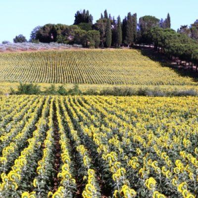 Strada del vino di Cortona